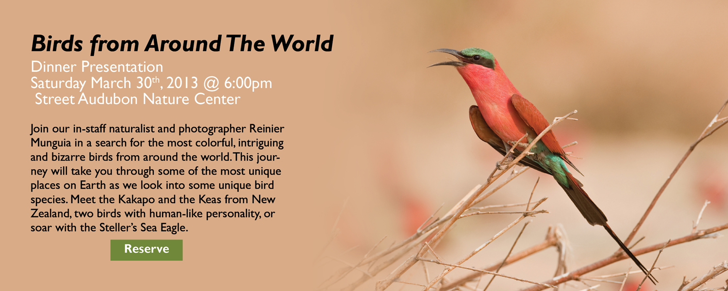 Birds From Around The World